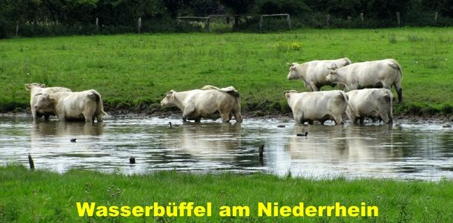 vsg-rheinhausen-wandern-2015-006
